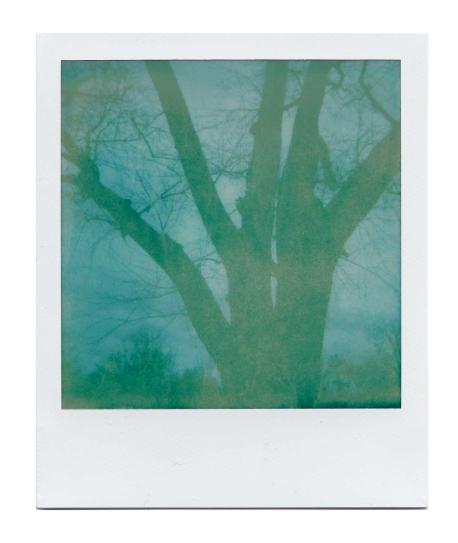 Winter Tree Over Exposure II