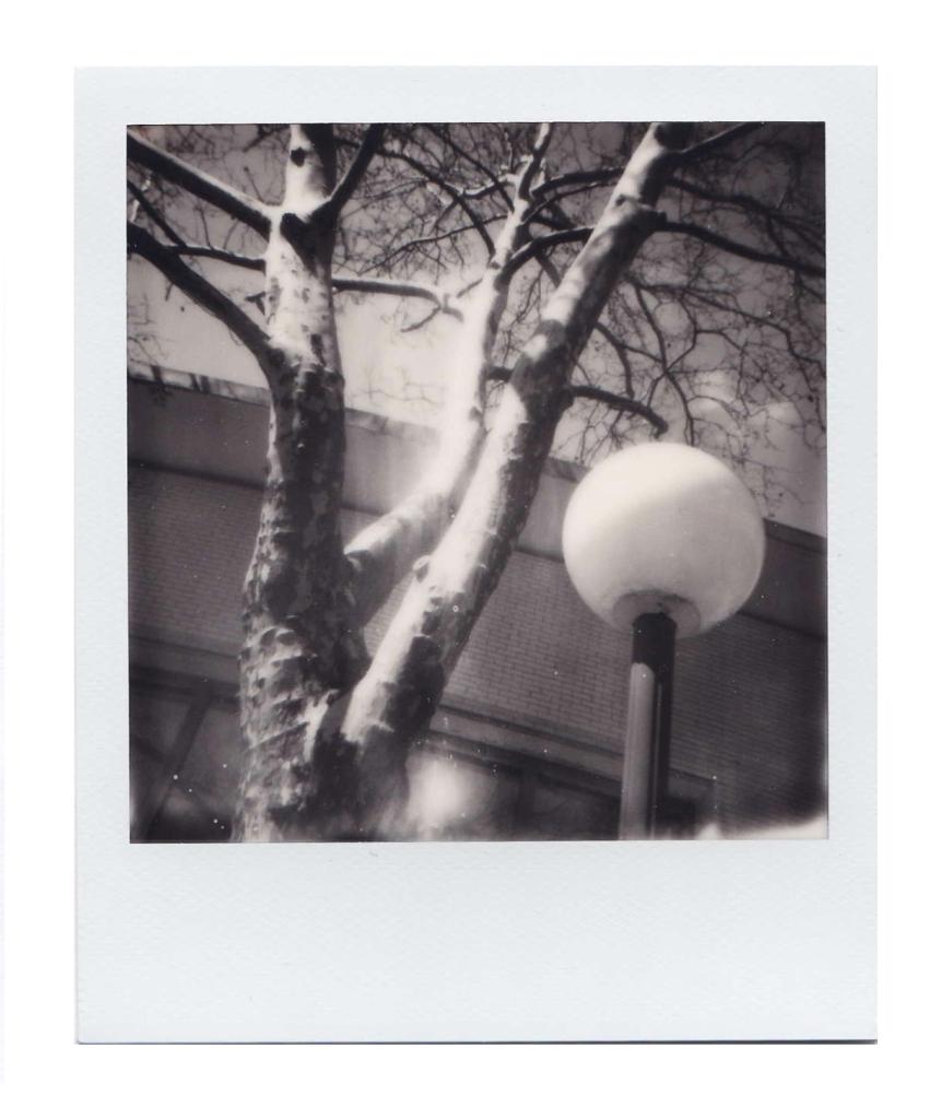 B&W Tree and Light