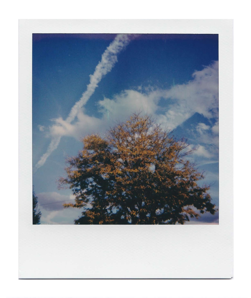 October Tree and Sky